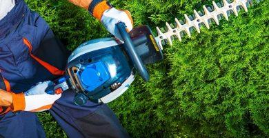 como cortar setos podar arbusto